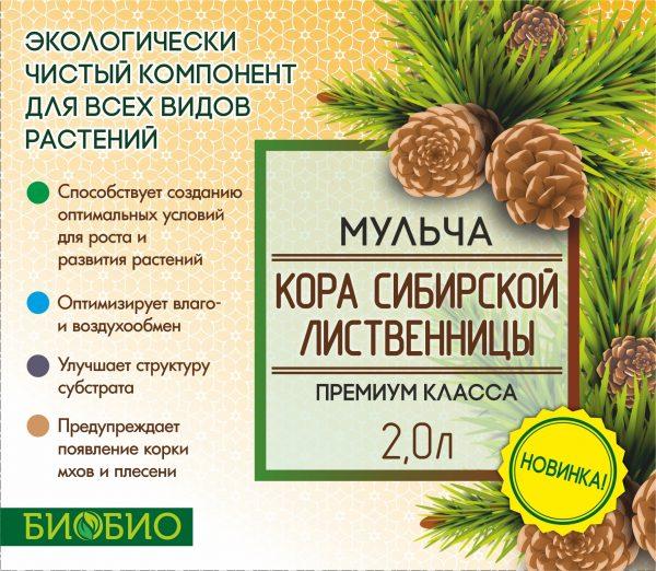 сибирская лиственница